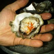 big oyster ob