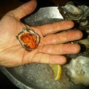 little oyster ob